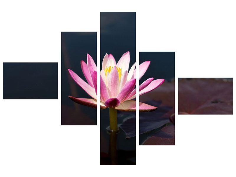 Acrylglasbild 5-teilig modern Seerose in der Abenddämmerung