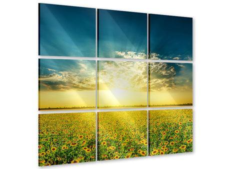 Acrylglasbild 9-teilig Sonnenblumen in der Abendsonne