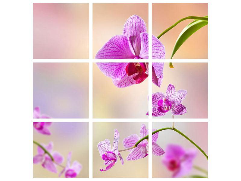 Acrylglasbild 9-teilig Romantische Orchideen
