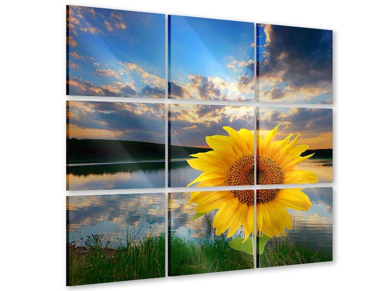Acrylglasbild 9-teilig Sonnenblume am See