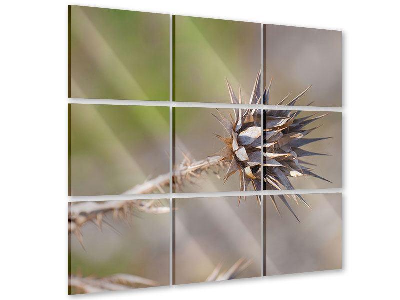 Acrylglasbild 9-teilig Die Wüstenblume