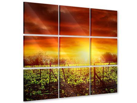 Acrylglasbild 9-teilig Der Weinberg bei Sonnenuntergang