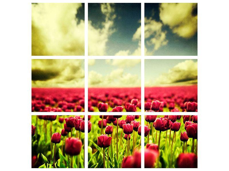 Acrylglasbild 9-teilig Ein Tulpenfeld
