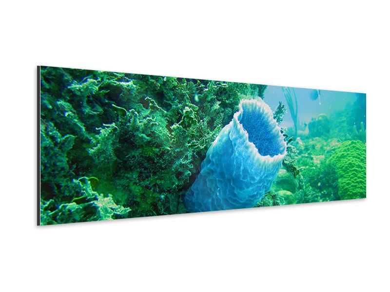 Aluminiumbild Panorama Korallen
