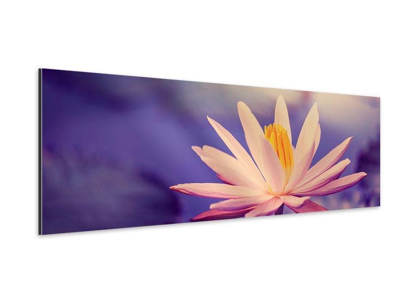 Aluminiumbild Panorama Lotus bei Sonnenuntergang