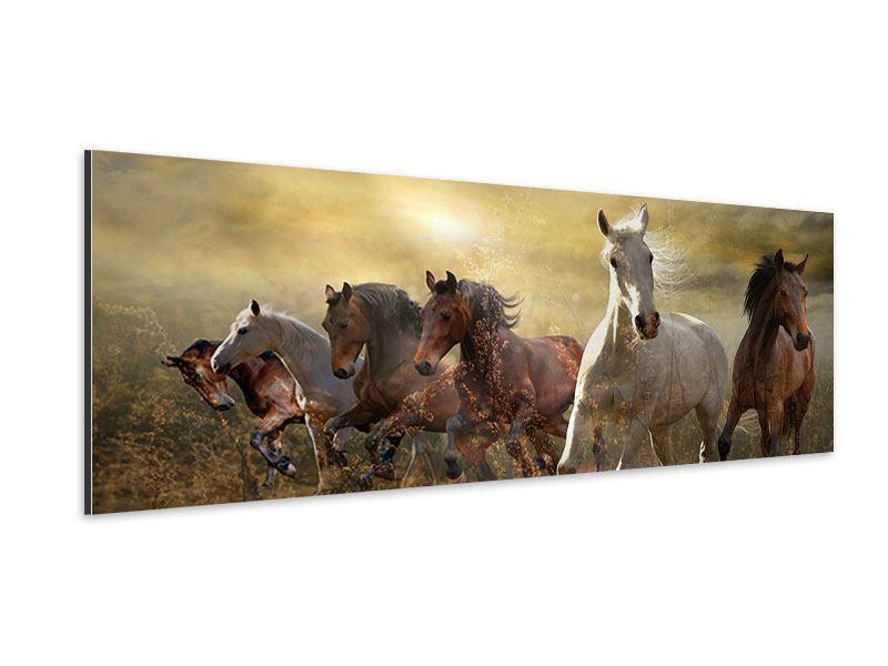 Aluminiumbild Panorama Wilde Pferde