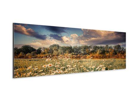 Aluminiumbild Panorama Die Wiesenmargerite am Fluss