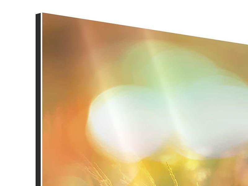 Aluminiumbild Panorama Blumenwiese in der Abenddämmerung