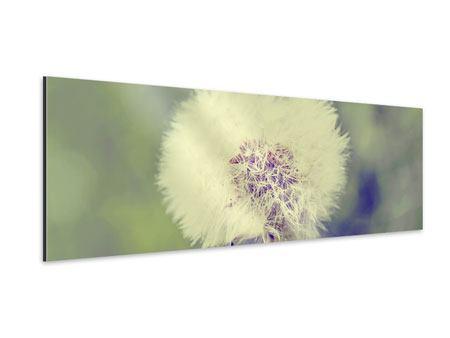 Aluminiumbild Panorama Die Pusteblume