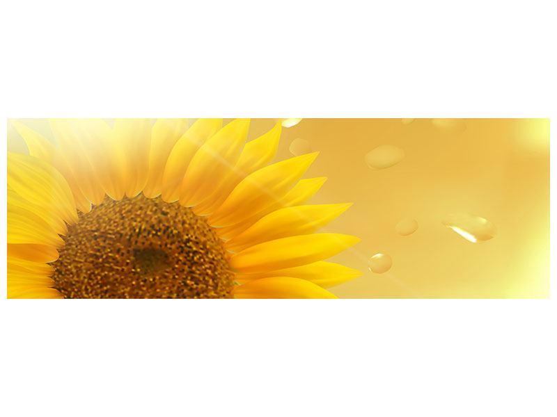Aluminiumbild Panorama Sonnenblume im Morgentau