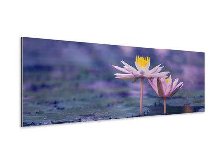 Aluminiumbild Panorama Lotus Duo im Sonnenaufgang