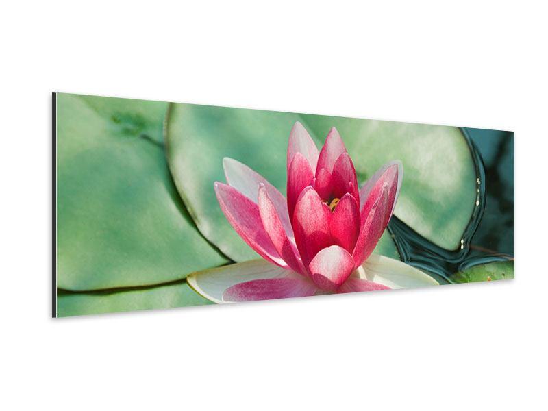 Aluminiumbild Panorama Der Frosch und das Lotusblatt
