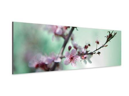 Aluminiumbild Panorama Die japanische Kirschblüte