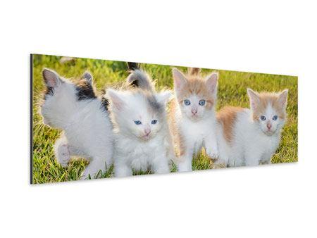Aluminiumbild Panorama Katzenbabys