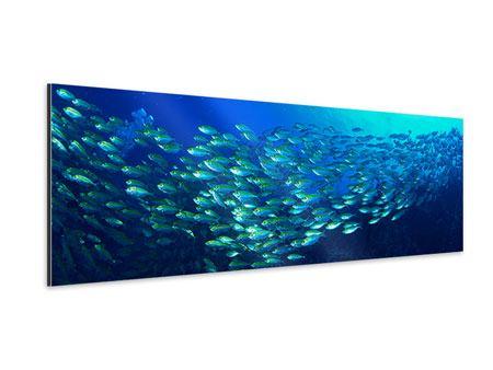 Aluminiumbild Panorama Fischschwarm