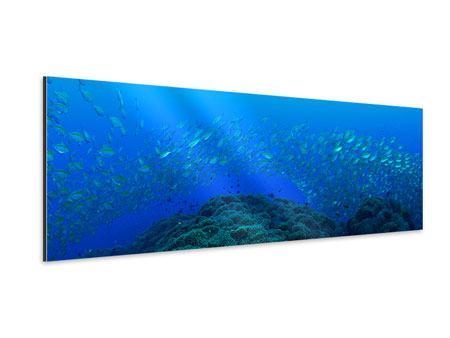 Aluminiumbild Panorama Fischschwärme