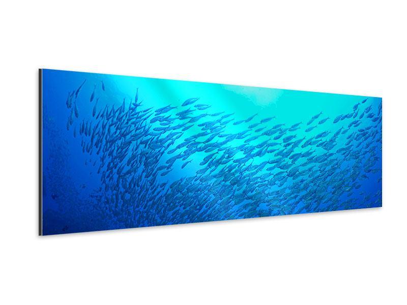 Aluminiumbild Panorama Fischwelt