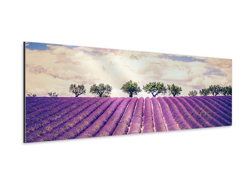 Aluminiumbild Panorama Das Lavendelfeld