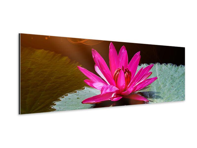 Aluminiumbild Panorama Der Frosch und das Seerosenblatt