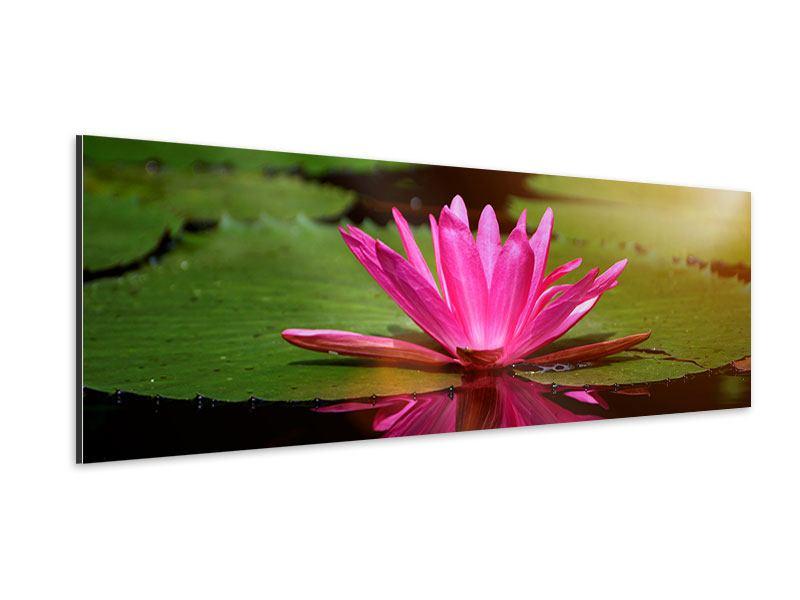 Aluminiumbild Panorama Lotus im Wasser