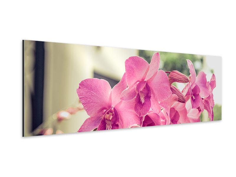 Aluminiumbild Panorama Ein Fensterplatz für die Orchideen
