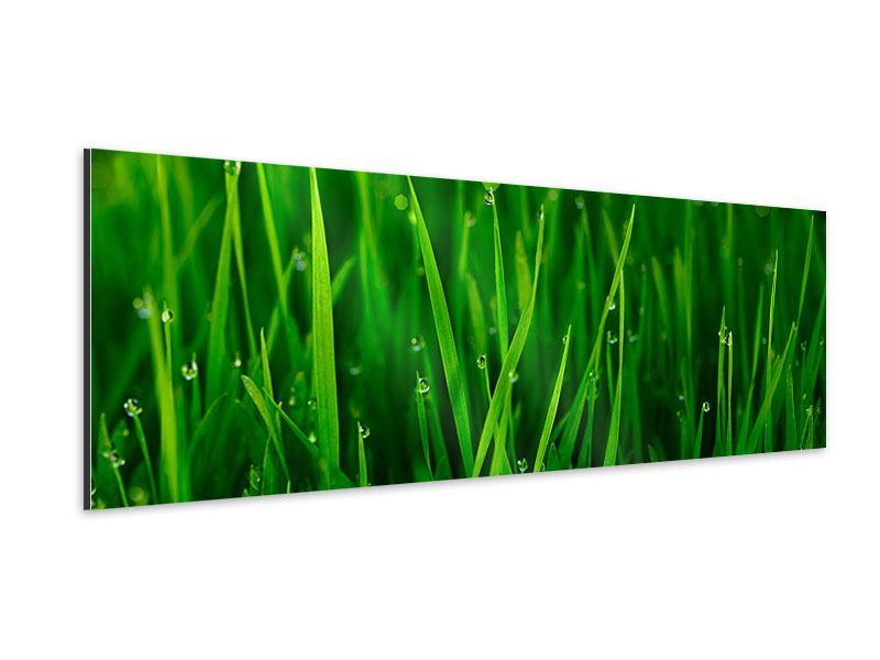 Aluminiumbild Panorama Gras mit Morgentau