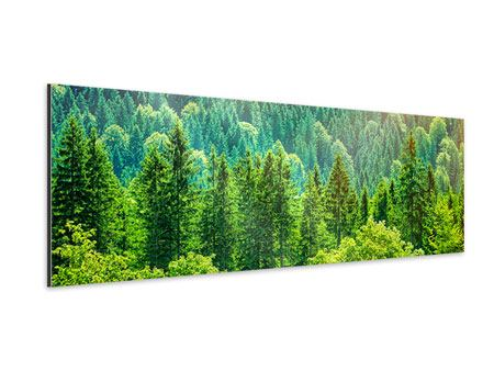 Aluminiumbild Panorama Der Waldhügel