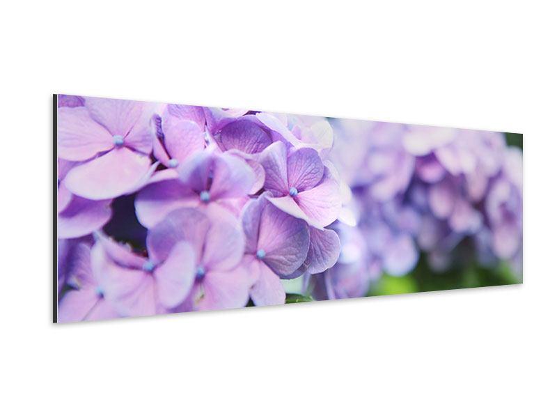 Aluminiumbild Panorama Hortensien