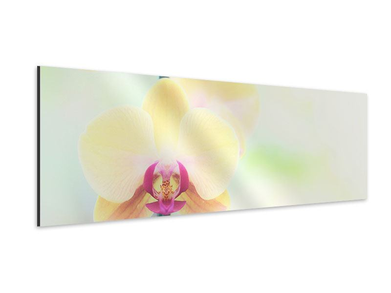 Aluminiumbild Panorama Lovely Orchidee