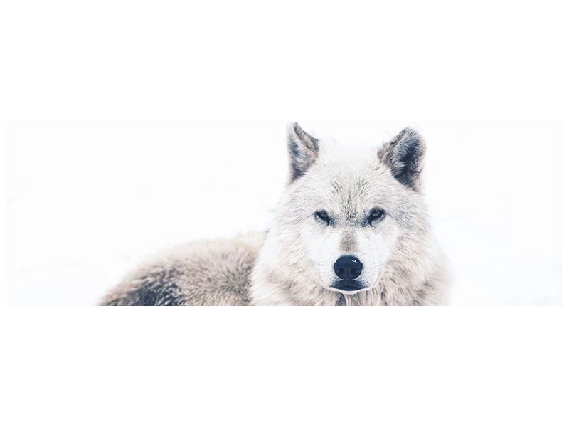 Aluminiumbild Panorama Der Wolf