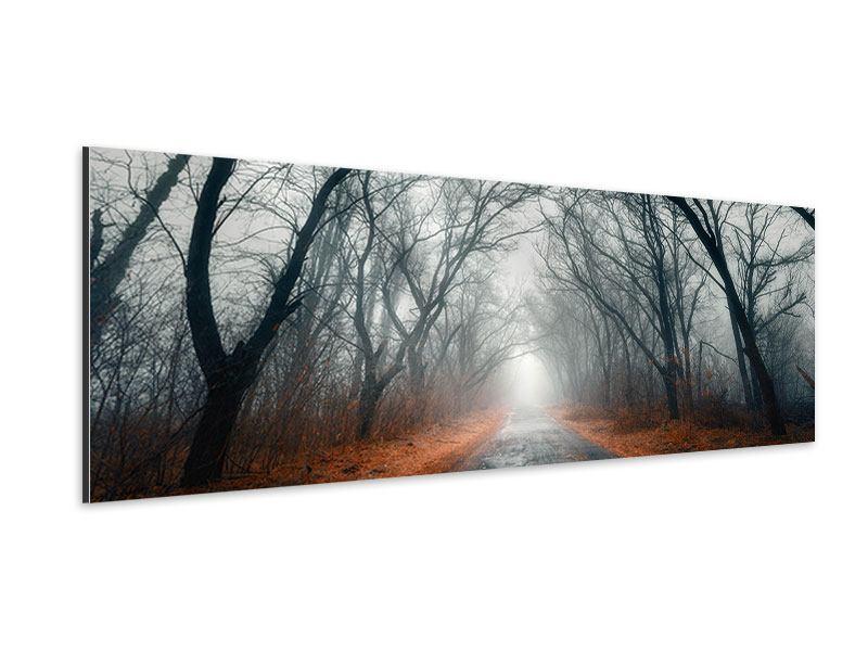 Aluminiumbild Panorama Mysteriöse Stimmung im Wald