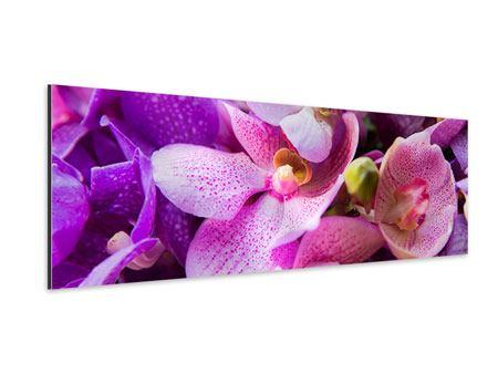 Aluminiumbild Panorama Im Orchideenparadies