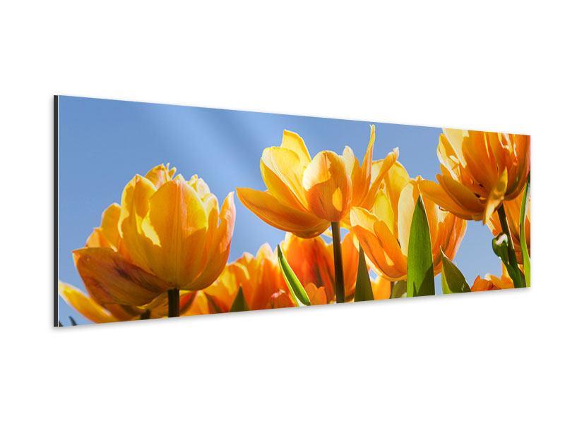 Aluminiumbild Panorama Märchenhafte Tulpen