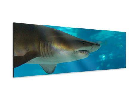Aluminiumbild Panorama Der Haifisch