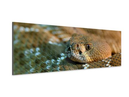 Aluminiumbild Panorama Viper