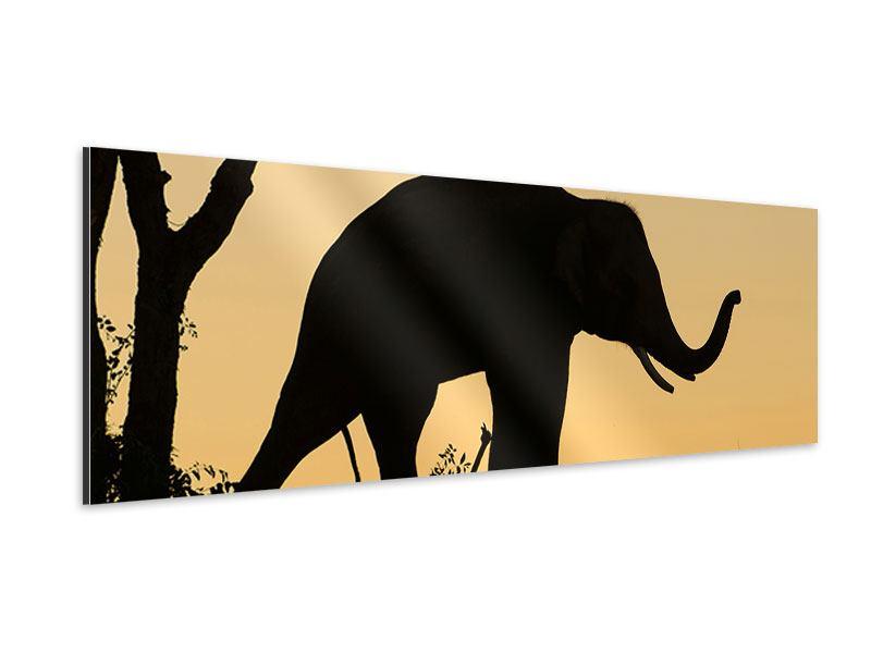 Aluminiumbild Panorama Elefant an der Wand
