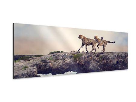 Aluminiumbild Panorama Zwei Geparden