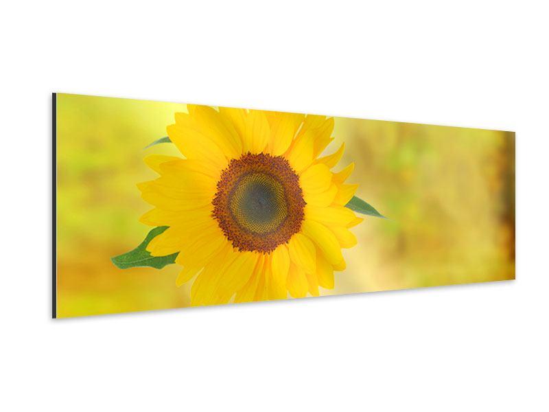 Aluminiumbild Panorama Die Sonnenblume