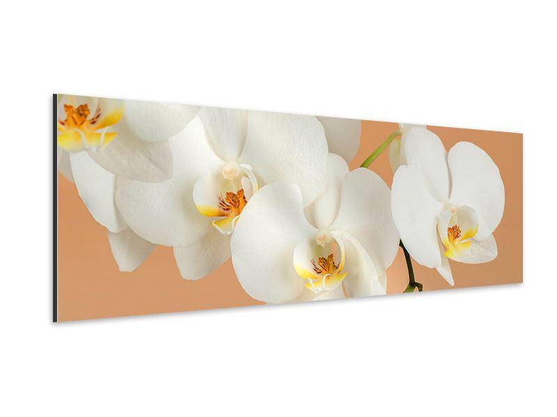 Aluminiumbild Panorama Weisse Orchideenblüten