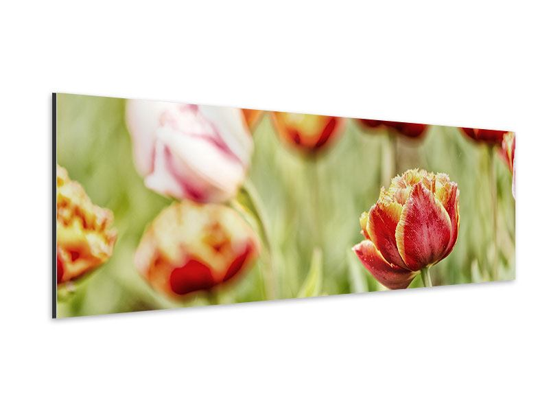Aluminiumbild Panorama Die Schönheit der Tulpe