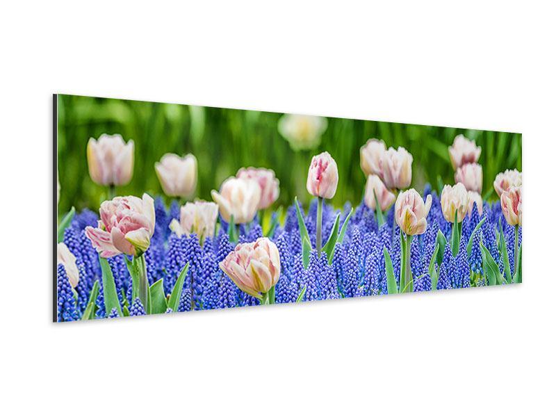 Aluminiumbild Panorama Ein Garten mit Tulpen