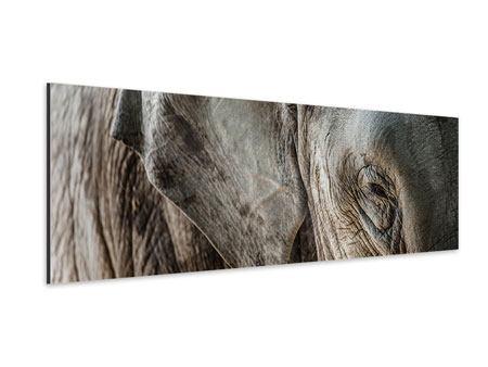 Aluminiumbild Panorama Close Up Elefant