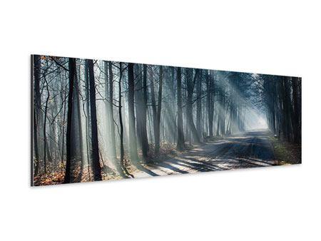 Aluminiumbild Panorama Wald im Lichtstrahl