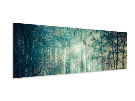Aluminiumbild Panorama Pinienwald