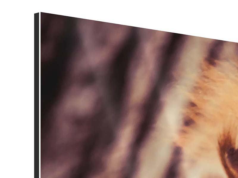 Aluminiumbild Panorama Eichhörnchen