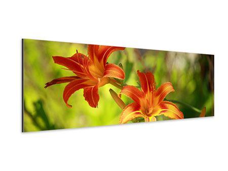 Aluminiumbild Panorama Lilien in der Natur
