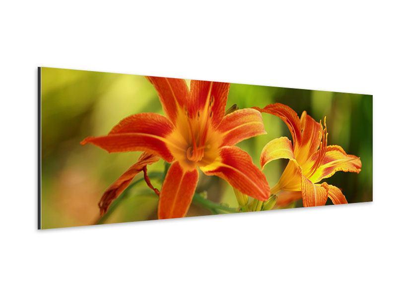 Aluminiumbild Panorama Natural Lilien