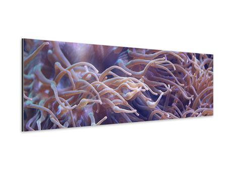 Aluminiumbild Panorama Korallenriff