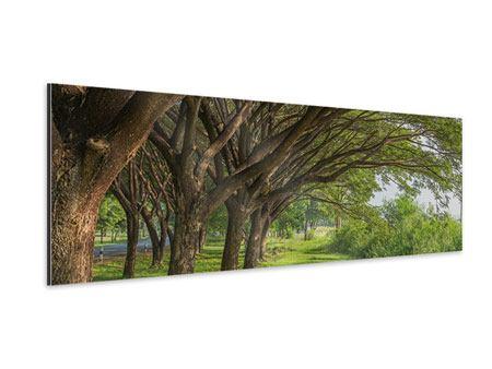 Aluminiumbild Panorama Alter Baumbestand