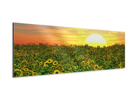 Aluminiumbild Panorama Blumenpanorama bei Sonnenuntergang